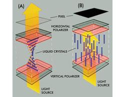 Liquid Crystal Movement